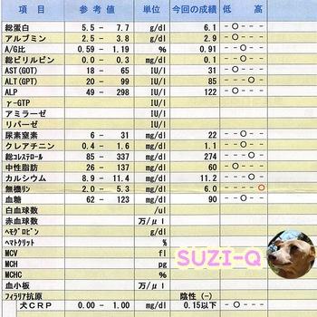 SUZIQ201704.jpg