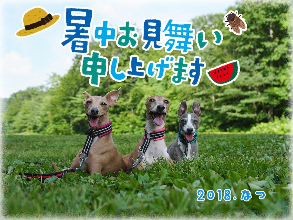 イタグレ3姉妹の写真.jpg